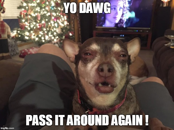 YO DAWG PASS IT AROUND AGAIN ! | image tagged in funny chihuahua | made w/ Imgflip meme maker