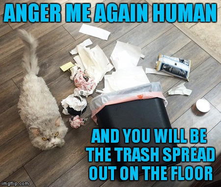 ANGER ME AGAIN HUMAN AND YOU WILL BE THE TRASH SPREAD OUT ON THE FLOOR | made w/ Imgflip meme maker