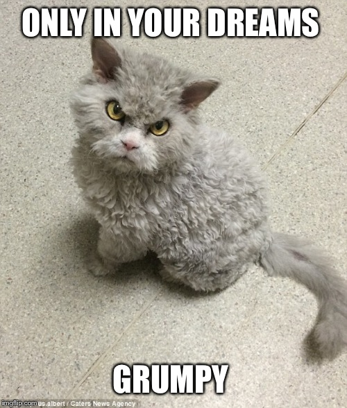 ONLY IN YOUR DREAMS GRUMPY | made w/ Imgflip meme maker