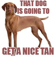 THAT DOG IS GOING TO GET A NICE TAN | made w/ Imgflip meme maker