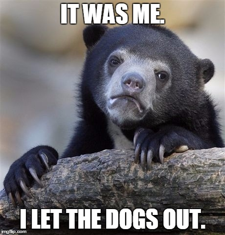 Confession Bear Meme | IT WAS ME. I LET THE DOGS OUT. | image tagged in memes,confession bear | made w/ Imgflip meme maker
