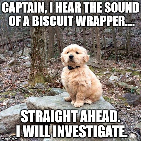 Guard Dog...!! |  CAPTAIN, I HEAR THE SOUND OF A BISCUIT WRAPPER.... STRAIGHT AHEAD. I WILL INVESTIGATE. | image tagged in memes,funny memes,dog,forrest,guard,dog memes | made w/ Imgflip meme maker