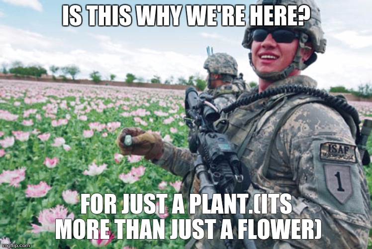 opium | IS THIS WHY WE'RE HERE? FOR JUST A PLANT.(ITS MORE THAN JUST A FLOWER) | image tagged in opium | made w/ Imgflip meme maker