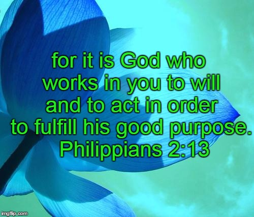 blue flower | for it is God who works in you to will and to act in order to fulfill his good purpose.  Philippians 2:13 | image tagged in blue flower | made w/ Imgflip meme maker
