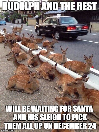 RUDOLPH AND THE REST WILL BE WAITING FOR SANTA AND HIS SLEIGH TO PICK THEM ALL UP ON DECEMBER 24 | image tagged in rudolph,reindeer,funny | made w/ Imgflip meme maker