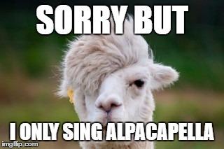 Alpacapella | SORRY BUT I ONLY SING ALPACAPELLA | image tagged in llamas, alpaca,