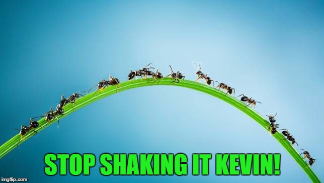 Ants have problems too... :) | STOP SHAKING IT KEVIN! | image tagged in immigrant invading ants,memes,animals,ants | made w/ Imgflip meme maker