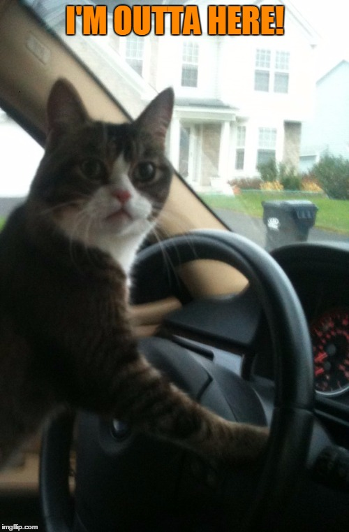 JoJo The Driving Cat | I'M OUTTA HERE! | image tagged in jojo the driving cat | made w/ Imgflip meme maker