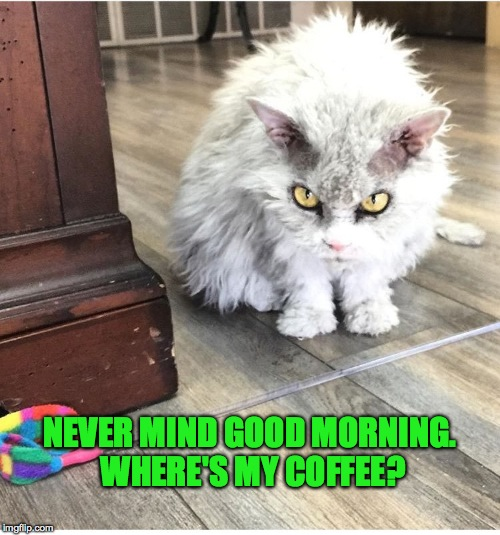 Image result for where's my coffee