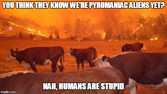 YOU THINK THEY KNOW WE'RE PYROMANIAC ALIENS YET? NAH, HUMANS ARE STUPID | made w/ Imgflip meme maker