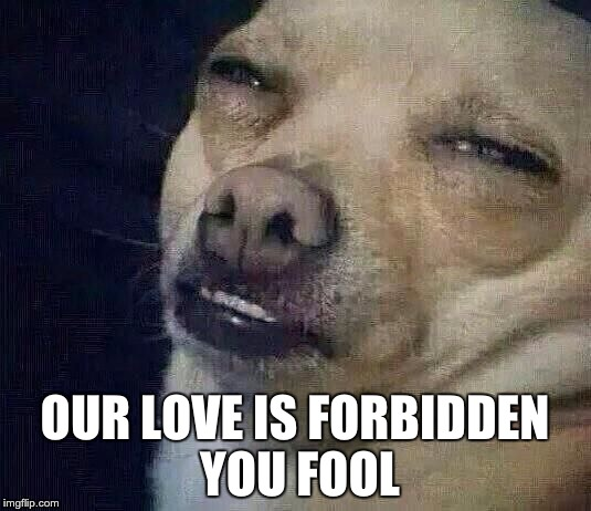high | OUR LOVE IS FORBIDDEN YOU FOOL | image tagged in high | made w/ Imgflip meme maker