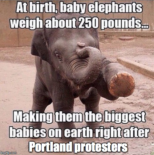 Portland protesters | image tagged in protesters,political,funny,elephant | made w/ Imgflip meme maker