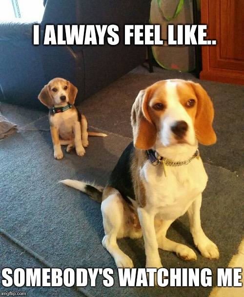 Rockwell  |  I ALWAYS FEEL LIKE.. SOMEBODY'S WATCHING ME | image tagged in beagle,funny dogs,pop music,charleston | made w/ Imgflip meme maker