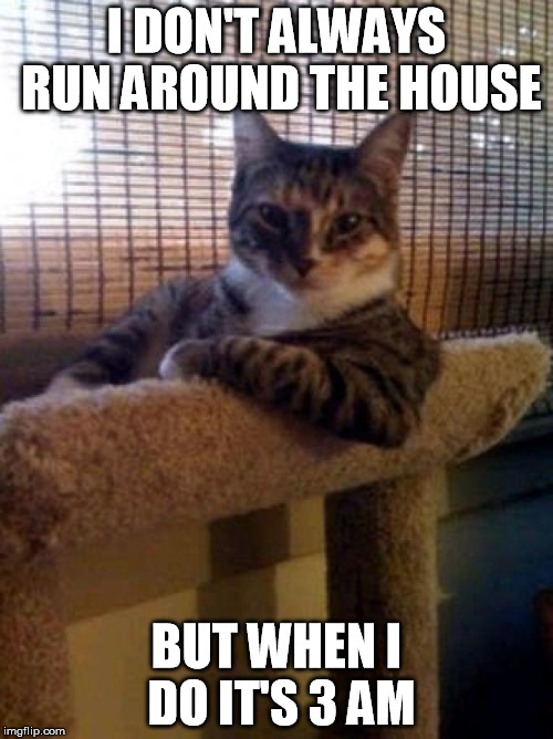 The Most Interesting Cat In The World Meme | I DON'T ALWAYS RUN AROUND THE HOUSE BUT WHEN I DO IT'S 3 AM | image tagged in memes,the most interesting cat in the world | made w/ Imgflip meme maker