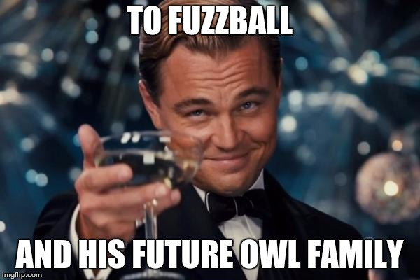 Leonardo Dicaprio Cheers Meme | TO FUZZBALL AND HIS FUTURE OWL FAMILY | image tagged in memes,leonardo dicaprio cheers | made w/ Imgflip meme maker