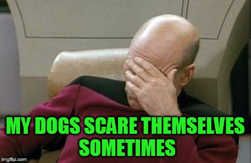 Captain Picard Facepalm Meme | MY DOGS SCARE THEMSELVES SOMETIMES | image tagged in memes,captain picard facepalm | made w/ Imgflip meme maker