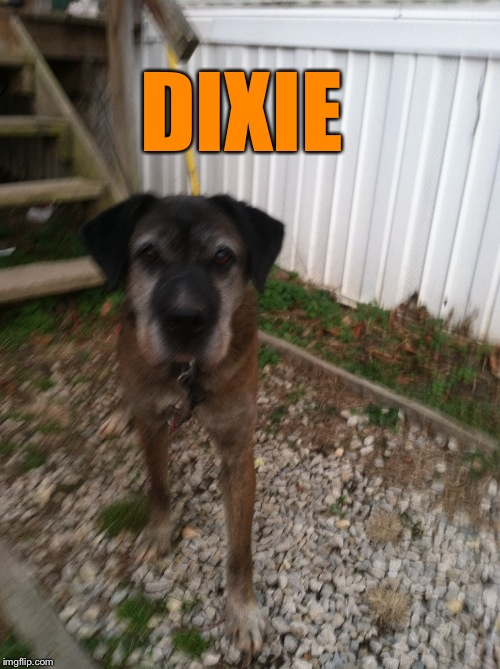 DIXIE | made w/ Imgflip meme maker