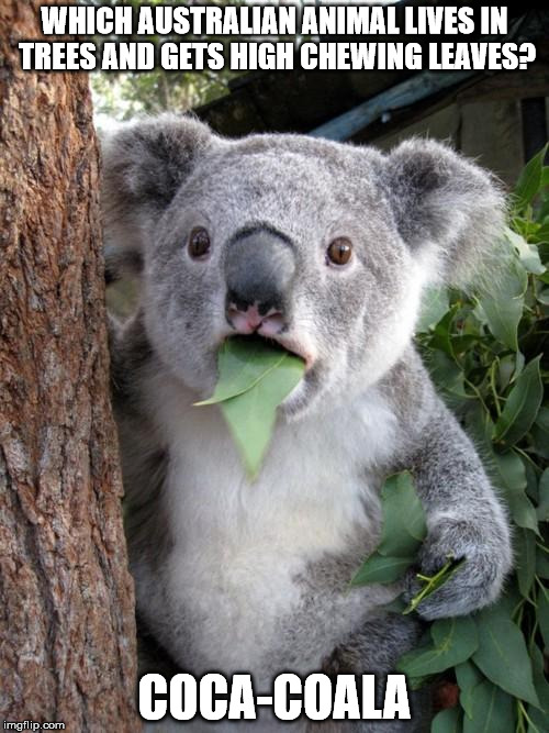 "A real ""fizzy lifting drink"" 