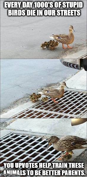 Poor things | EVERY DAY 1000'S OF STUPID BIRDS DIE IN OUR STREETS YOU UPVOTES HELP TRAIN THESE ANIMALS TO BE BETTER PARENTS. | image tagged in ducks | made w/ Imgflip meme maker