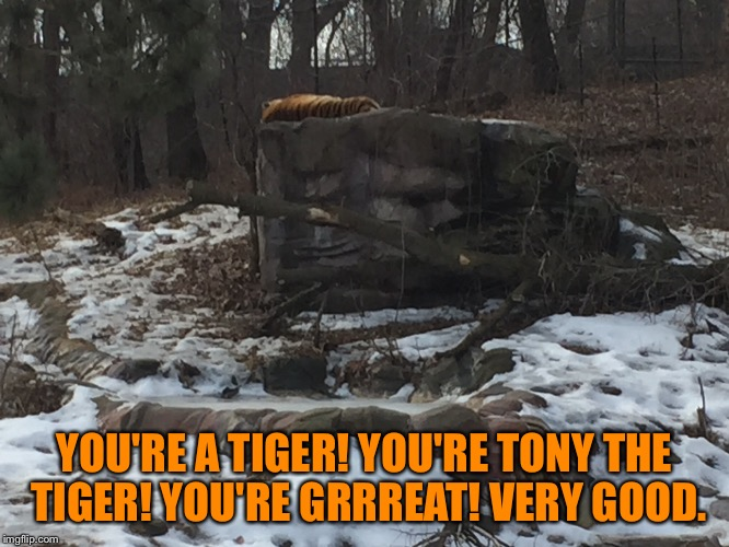 Austin Powers - Famous Quote Weekend |  YOU'RE A TIGER! YOU'RE TONY THE TIGER! YOU'RE GRRREAT! VERY GOOD. | image tagged in famous quote weekend,austin powers 2,tony the tiger,photos by ghost | made w/ Imgflip meme maker