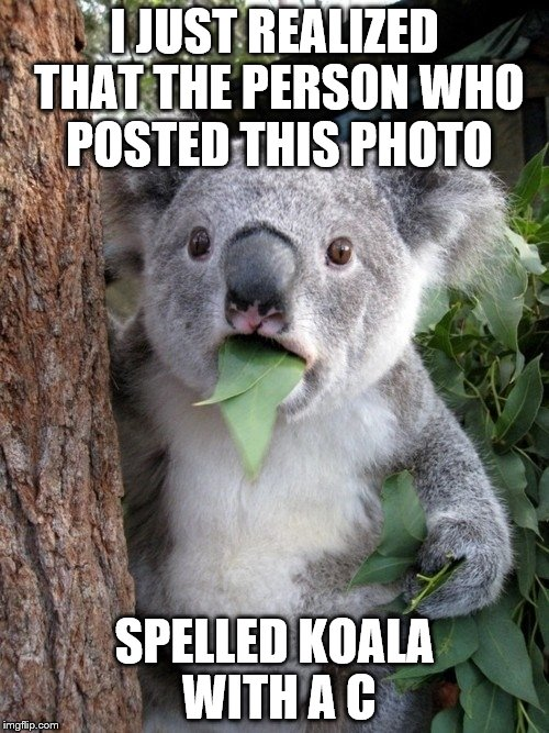 Surprised Coala Meme | I JUST REALIZED THAT THE PERSON WHO POSTED THIS PHOTO SPELLED KOALA WITH A C | image tagged in memes,surprised coala | made w/ Imgflip meme maker