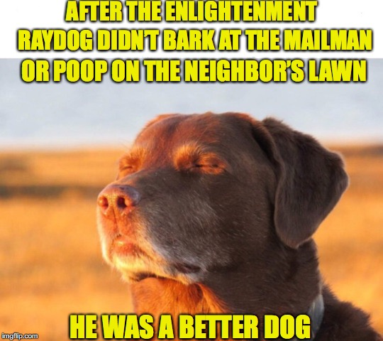 A New Leash On Life | AFTER THE ENLIGHTENMENT RAYDOG DIDN'T BARK AT THE MAILMAN OR POOP ON THE NEIGHBOR'S LAWN HE WAS A BETTER DOG | image tagged in raydog,awakening,spiritual | made w/ Imgflip meme maker