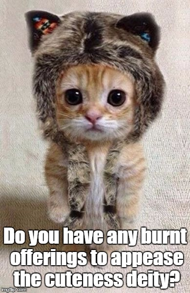 Do you have any burnt offerings to appease the cuteness deity? | image tagged in thank you | made w/ Imgflip meme maker