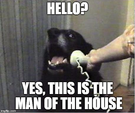 Yes this is dog | HELLO? YES, THIS IS THE MAN OF THE HOUSE | image tagged in yes this is dog | made w/ Imgflip meme maker