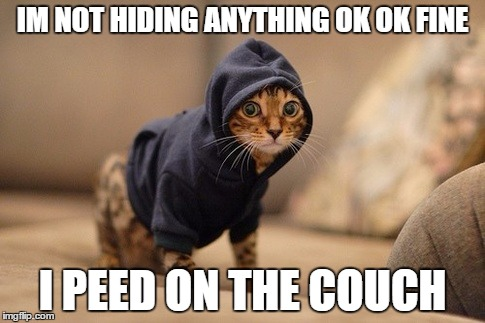 Hoody Cat | IM NOT HIDING ANYTHING OK OK FINE I PEED ON THE COUCH | image tagged in memes,hoody cat | made w/ Imgflip meme maker