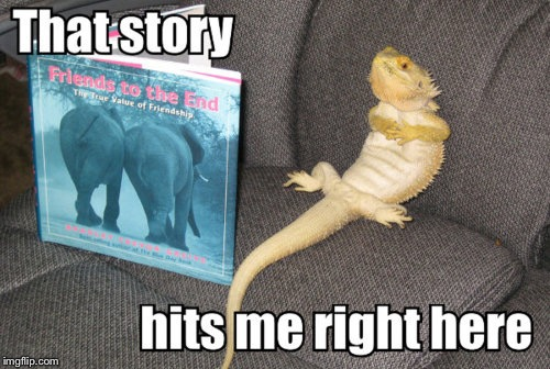 EQ-Dragon |  THAT STORY; HITS ME RIGHT HERE | image tagged in memes,next korean star | made w/ Imgflip meme maker