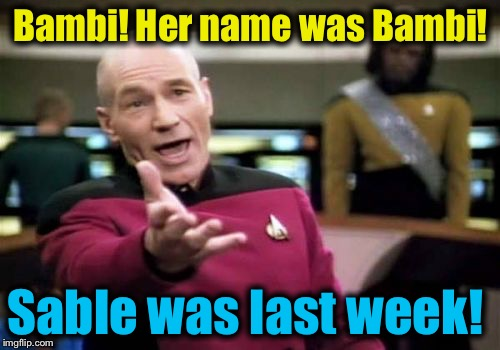 Picard Wtf Meme | Bambi! Her name was Bambi! Sable was last week! | image tagged in memes,picard wtf | made w/ Imgflip meme maker