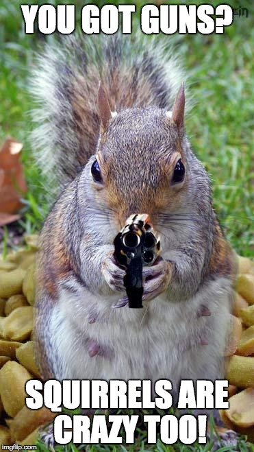 funny squirrels with guns (5) |  YOU GOT GUNS? SQUIRRELS ARE CRAZY TOO! | image tagged in funny squirrels with guns 5 | made w/ Imgflip meme maker