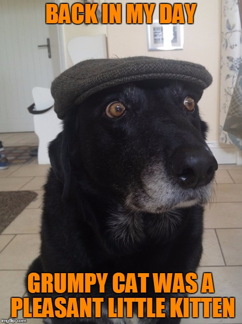 Back In My Day Dog | BACK IN MY DAY GRUMPY CAT WAS A PLEASANT LITTLE KITTEN | image tagged in back in my day dog,grumpy cat,grumpy didn't get enough hugs growing up,kitten,animals,dogs | made w/ Imgflip meme maker