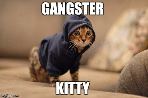 Hoody Cat | GANGSTER KITTY | image tagged in memes,hoody cat | made w/ Imgflip meme maker