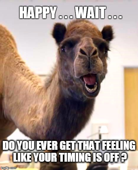 HAPPY . . . WAIT . . . DO YOU EVER GET THAT FEELING LIKE YOUR TIMING IS OFF ? | image tagged in hump day camel,hump day,happy tuesday,that feeling when | made w/ Imgflip meme maker
