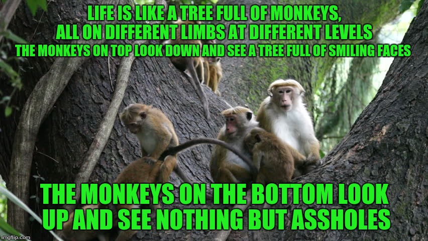 The Tree is Getting Crowded too! | LIFE IS LIKE A TREE FULL OF MONKEYS, ALL ON DIFFERENT LIMBS AT DIFFERENT LEVELS THE MONKEYS ON THE BOTTOM LOOK UP AND SEE NOTHING BUT ASSHOL | image tagged in memes,smile and keep moving up,custom template | made w/ Imgflip meme maker