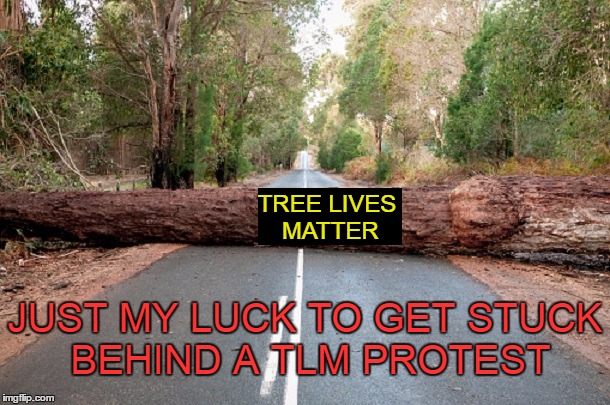 Get a job tree. | TREE LIVES MATTER JUST MY LUCK TO GET STUCK BEHIND A TLM PROTEST | image tagged in bad luck brian,blm | made w/ Imgflip meme maker