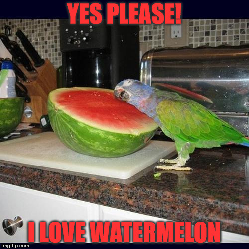 YES PLEASE! I LOVE WATERMELON | made w/ Imgflip meme maker