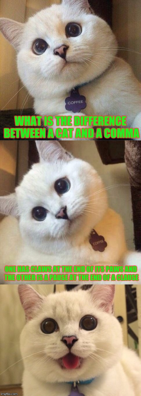 bad pun cat  | WHAT IS THE DIFFERENCE BETWEEN A CAT AND A COMMA ONE HAS CLAWS AT THE END OF ITS PAWS AND THE OTHER IS A PAUSE AT THE END OF A CLAUSE | image tagged in bad pun cat | made w/ Imgflip meme maker