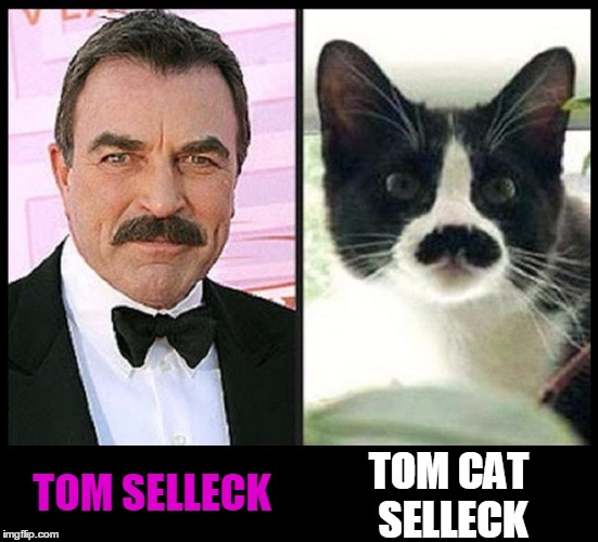 People Who Look Like Cats | TOM SELLECK TOM CAT SELLECK | image tagged in tom selleck,tom cat,vince vance,cats that look like people,cats versus people | made w/ Imgflip meme maker