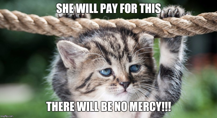 SHE WILL PAY FOR THIS THERE WILL BE NO MERCY!!! | image tagged in cat emotion,memes | made w/ Imgflip meme maker