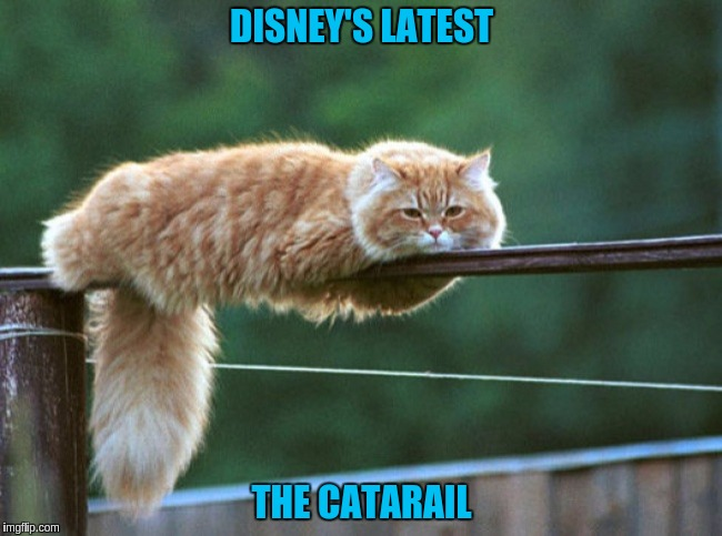 DISNEY'S LATEST THE CATARAIL | image tagged in cat,monorail,sleepy,disney | made w/ Imgflip meme maker
