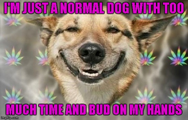 I'M JUST A NORMAL DOG WITH TOO MUCH TIME AND BUD ON MY HANDS | made w/ Imgflip meme maker