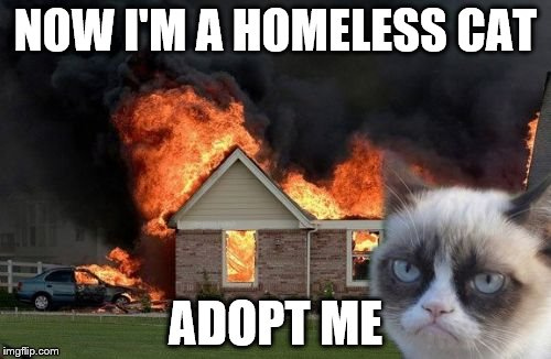 Burn Kitty Meme | NOW I'M A HOMELESS CAT ADOPT ME | image tagged in memes,burn kitty,grumpy cat | made w/ Imgflip meme maker