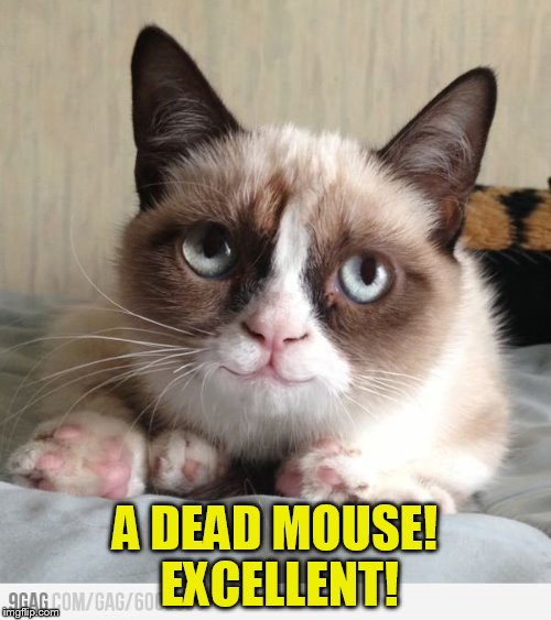 A DEAD MOUSE! EXCELLENT! | made w/ Imgflip meme maker
