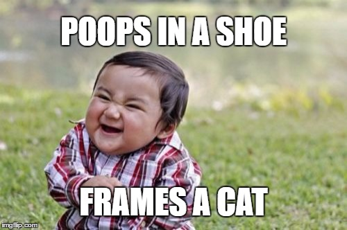 Evil Toddler Meme | POOPS IN A SHOE FRAMES A CAT | image tagged in memes,evil toddler | made w/ Imgflip meme maker
