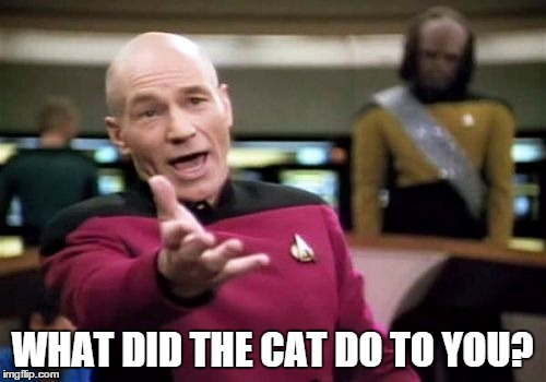Picard Wtf Meme | WHAT DID THE CAT DO TO YOU? | image tagged in memes,picard wtf | made w/ Imgflip meme maker