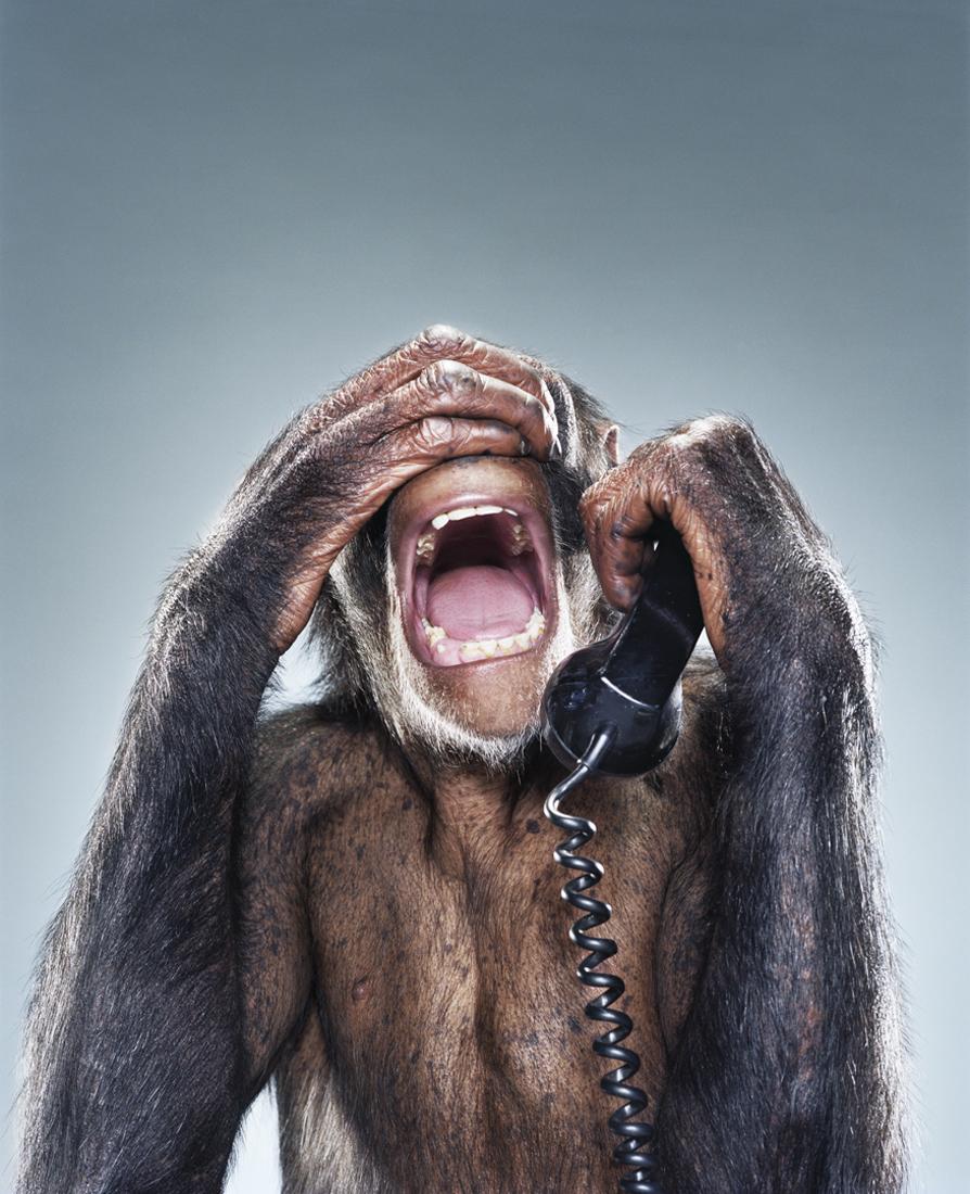 открытка с обезьяной и не звоните мне я в отпуске горшок