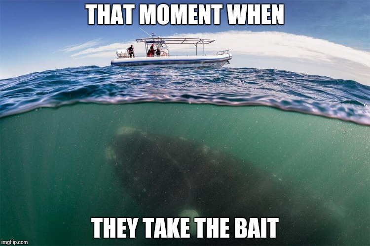 Gone Fishing | THAT MOMENT WHEN THEY TAKE THE BAIT | image tagged in fishing for whales,memes,funny,that moment when,fishing | made w/ Imgflip meme maker