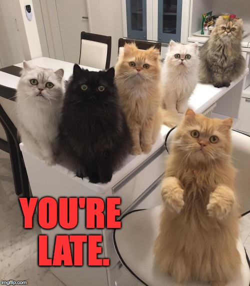 Office Cats Imgflip